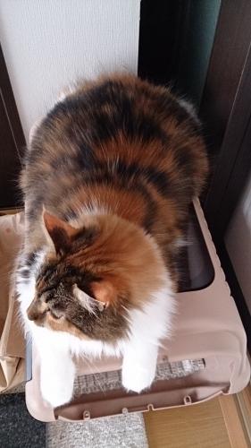 DEBU2_小豆猫