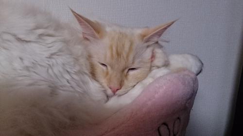かわゆいお手手2_白玉猫