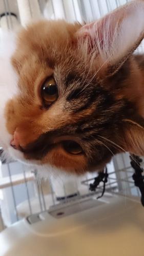 小豆猫アップ1