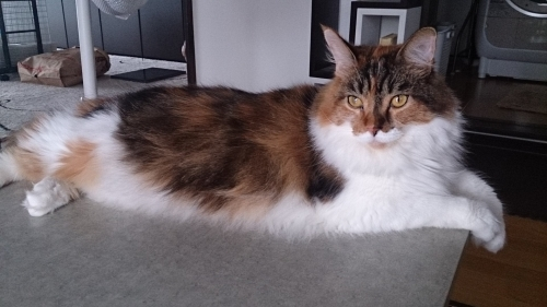 小豆猫テーブル