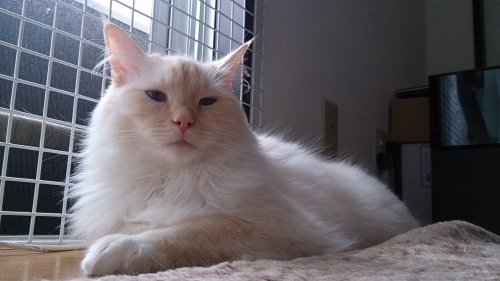 白玉猫窓1