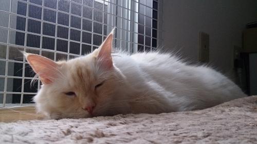 白玉猫窓2