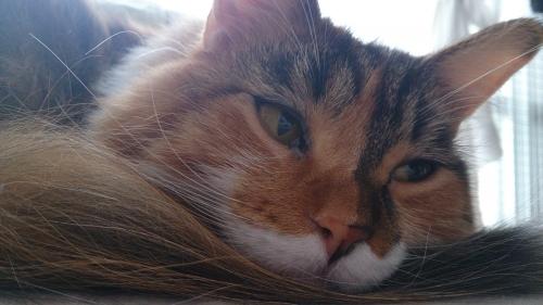 小豆猫考える2