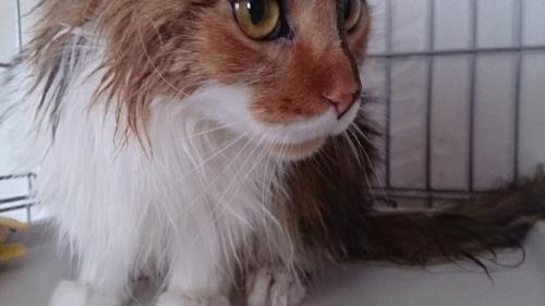 小豆猫アップ2