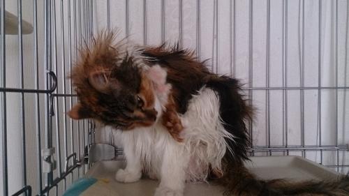 小豆猫濡れ2