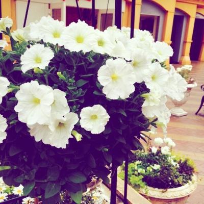iks_flower.jpg
