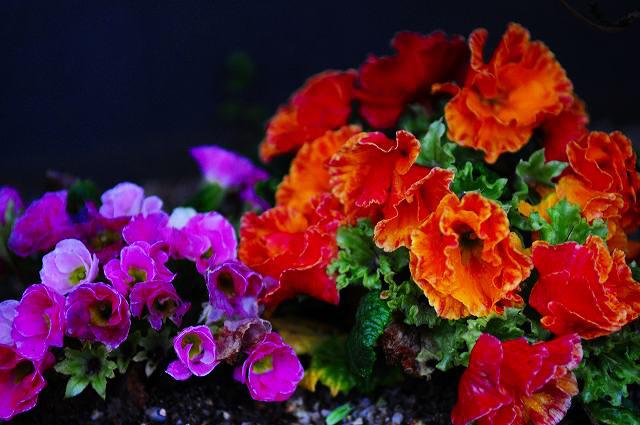 朝の花の色