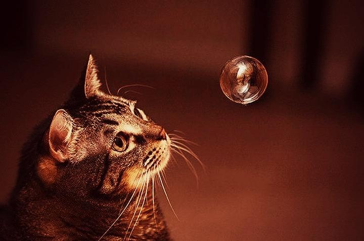 bubble15.jpg