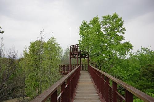 0029木登りタワー