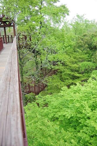 0033木登りタワー