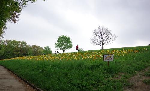 0048花の丘