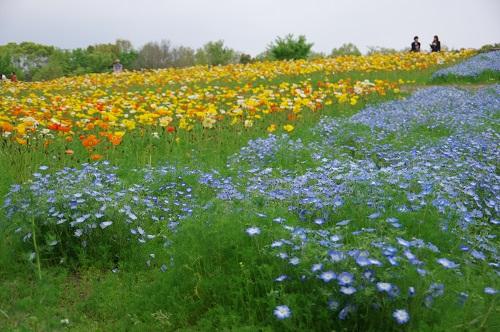 0070花の丘