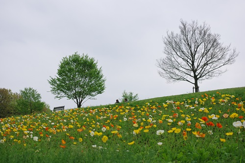 0087花の丘