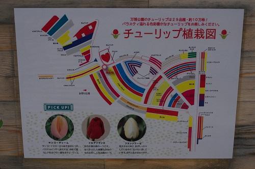 0116チューリップ植栽図