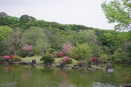 0148桜とツツジ