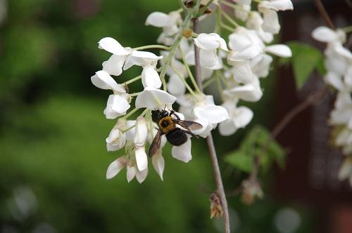 0219藤と蜂