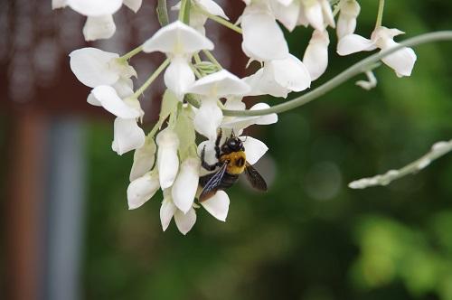 0223藤と蜂