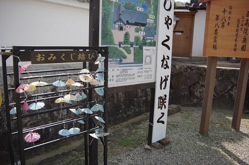0174傘おみくじ
