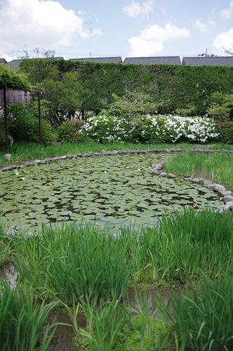 0093勾玉の形の池