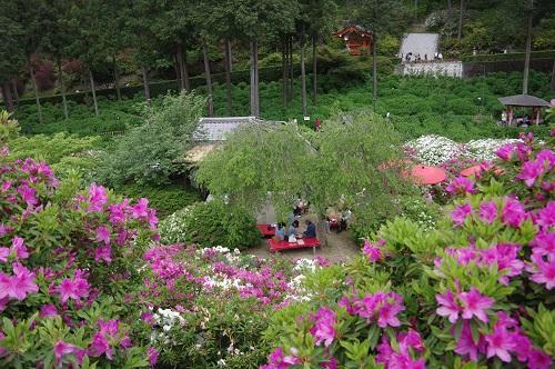 0073三室戸寺 花の茶屋