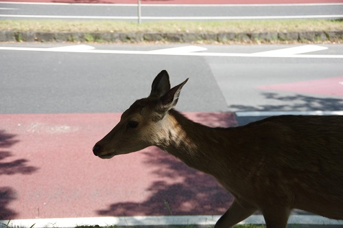 0003鹿