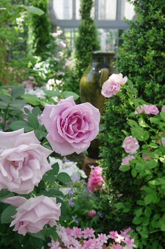 0261ジョセフィーヌの庭