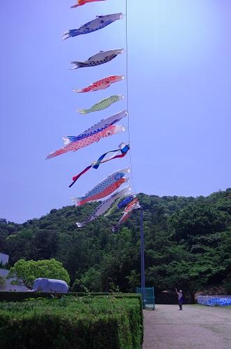 0121鯉のぼり