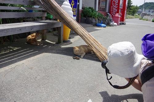 0138豊島猫