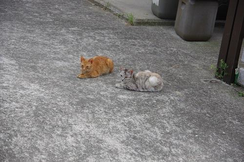 0167豊島猫