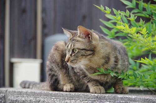 0170豊島猫