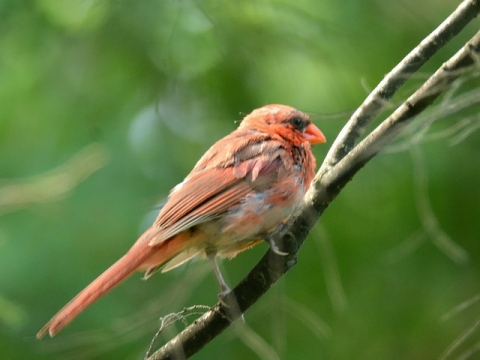 bird140828 (32)