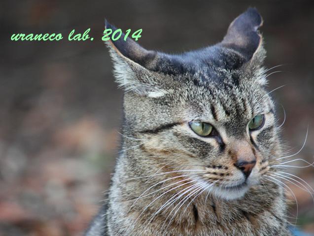 12月9日冬の猫6