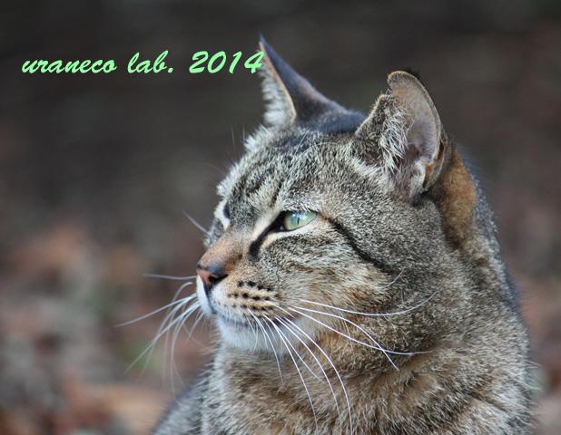 12月9日冬の猫5
