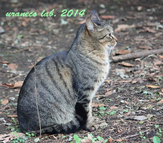 12月9日冬の猫4