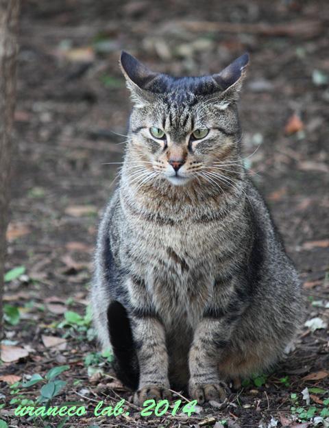 12月9日冬の猫3