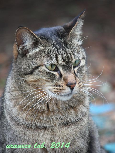 12月9日冬の猫2
