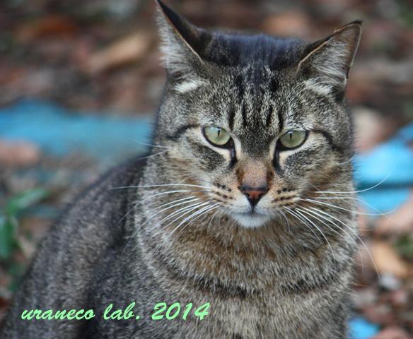 12月9日冬の猫8