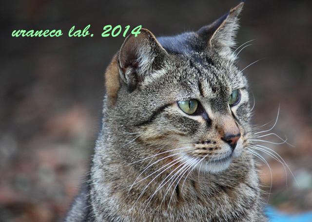 12月9日冬の猫7