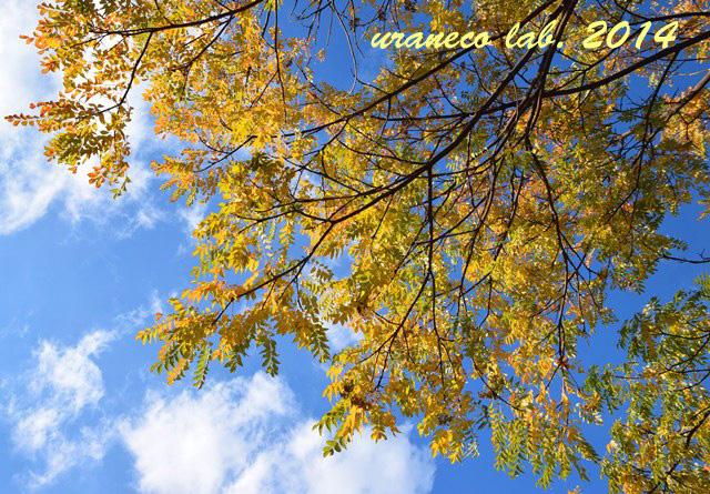 12月16日青空黄葉4