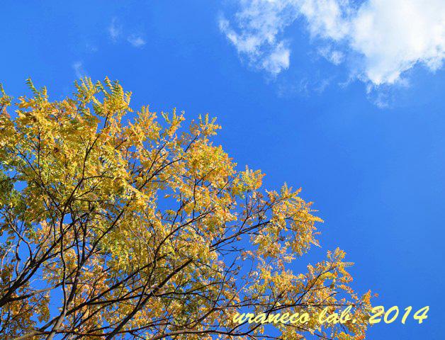 12月16日青空黄葉