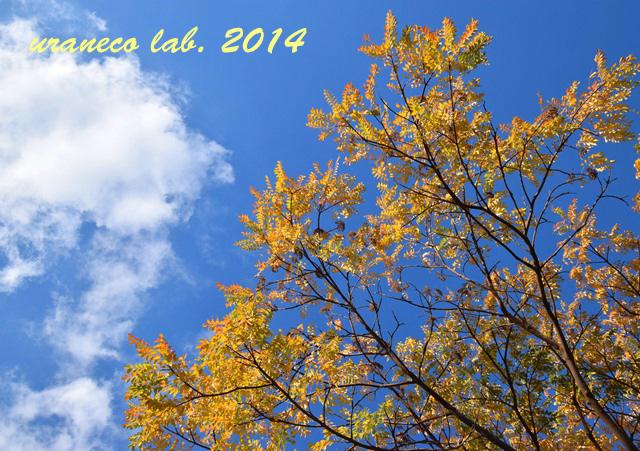 12月16日青空黄葉3