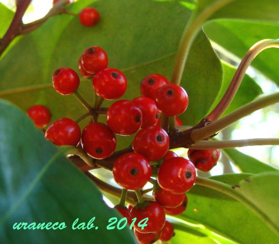 12月22日green and red