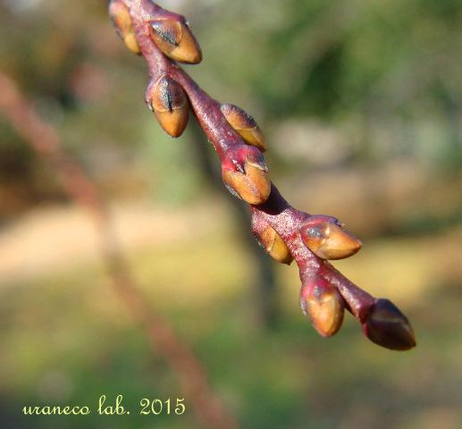 1月19日春を待つ4