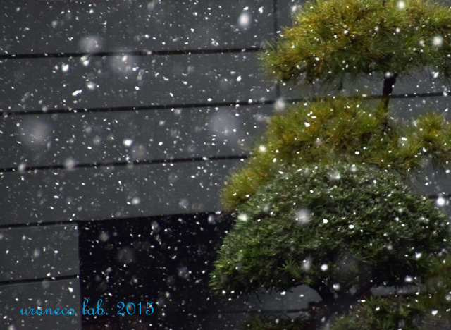 1月30日雪の朝2