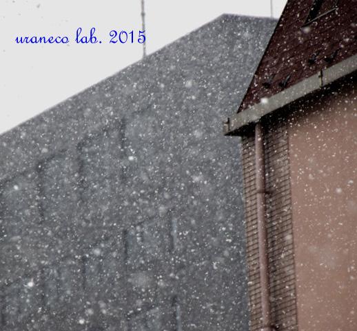 1月30日雪の朝