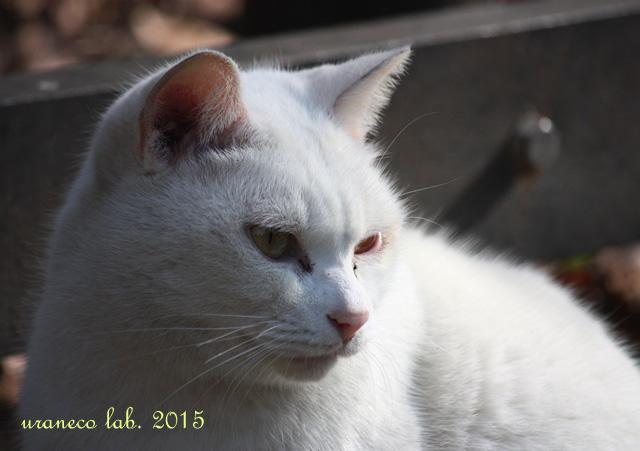 1月29日白猫ゆきお