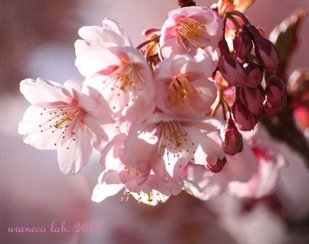 2月13日春の予感5