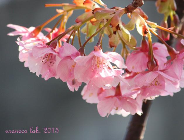 2月13日春の予感6