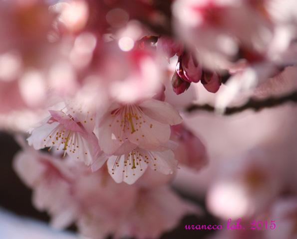 2月13日春の予感4
