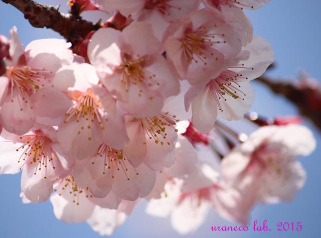 2月13日春の予感2